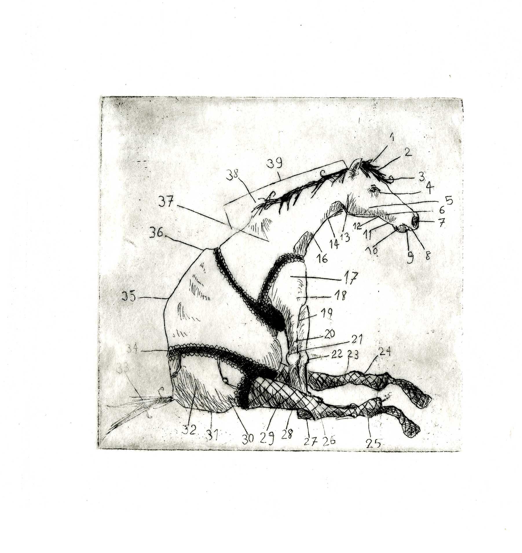 gravure cheval